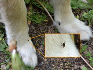 """""""Leg die Kamera beiseite und nimm's weg! Nimm endlich das Vieh da von meiner Pfote!!!"""" Tobias veranstaltet in aller Ruhe ein Fotoshooting, während sich ein blutrünstiges Monster in meinem Fell einnistet!"""