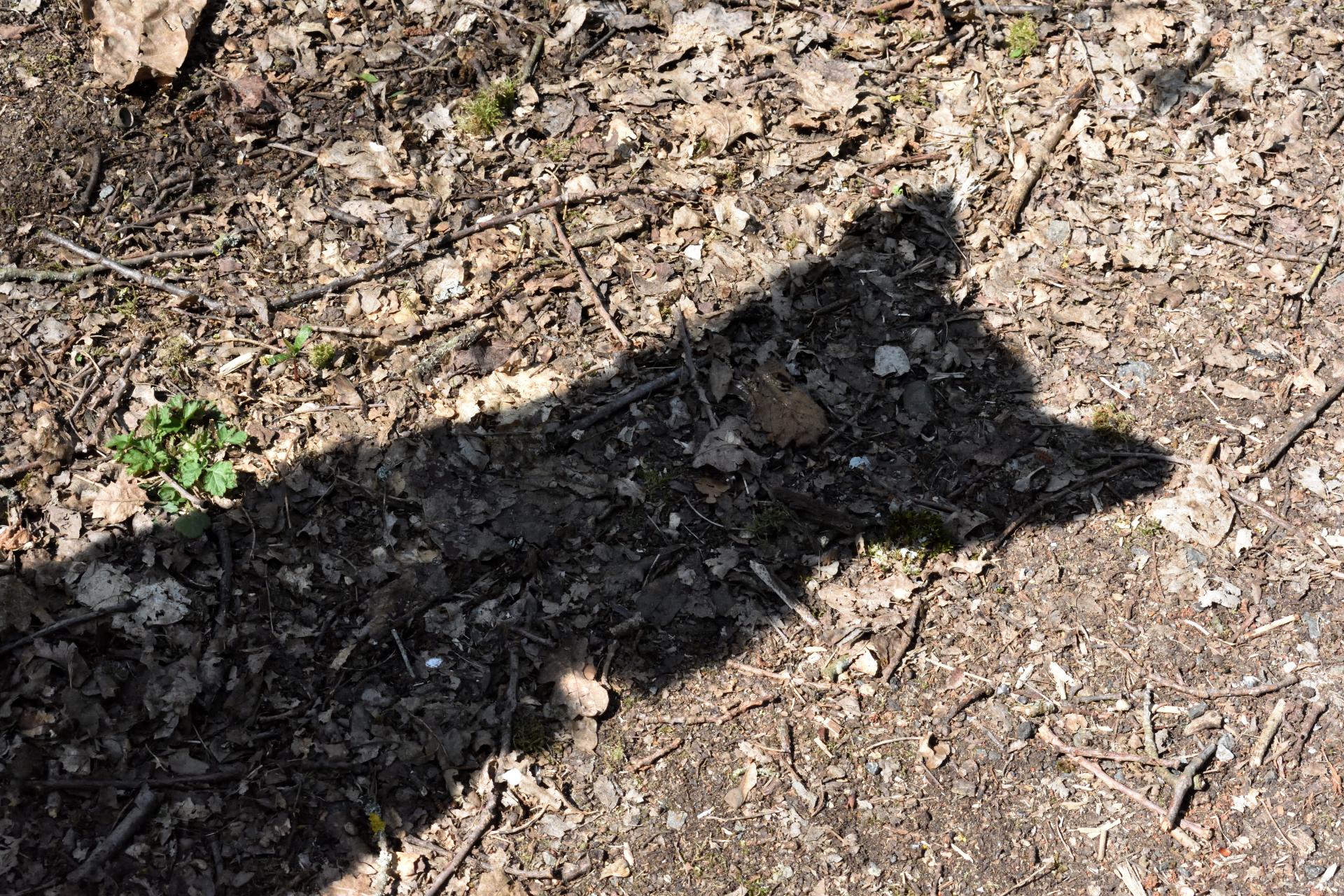 Filou auf Mäusejagd (Frühjahr 2020) | Das ist der Schatten von Super-Hund... naja, eigentlich bin nur ich es. Aber das macht schon Eindruck - zumindest auf meine Mäuschen!