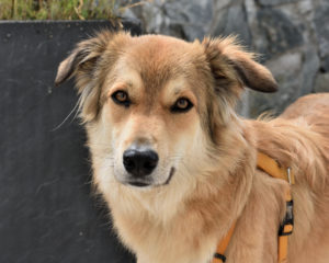 Ich bin Filou und schreibe in meinem tierischen Blog über alles, was ich so erlebe.