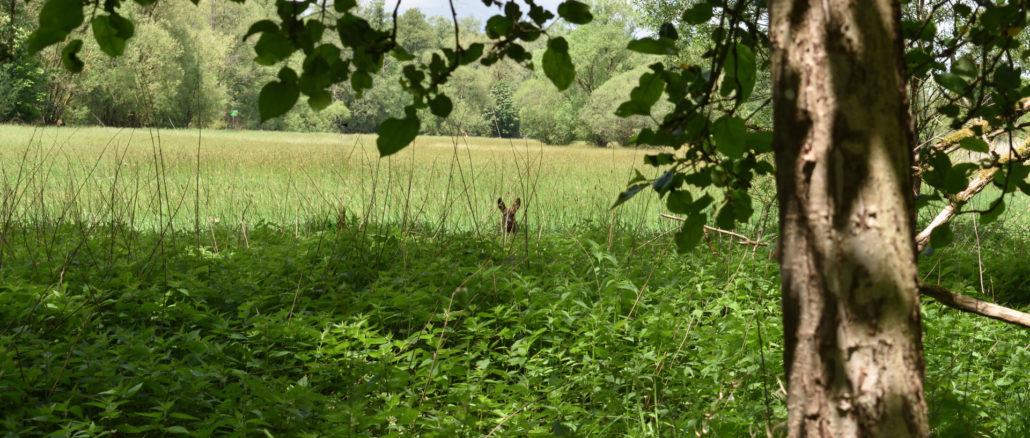 Auf meinen Spaziergängen habe ich eine tolle Freundschaft geschlossen - mit einem Reh! Kannst Du es auf dem Foto entdecken (guck genau hin)?