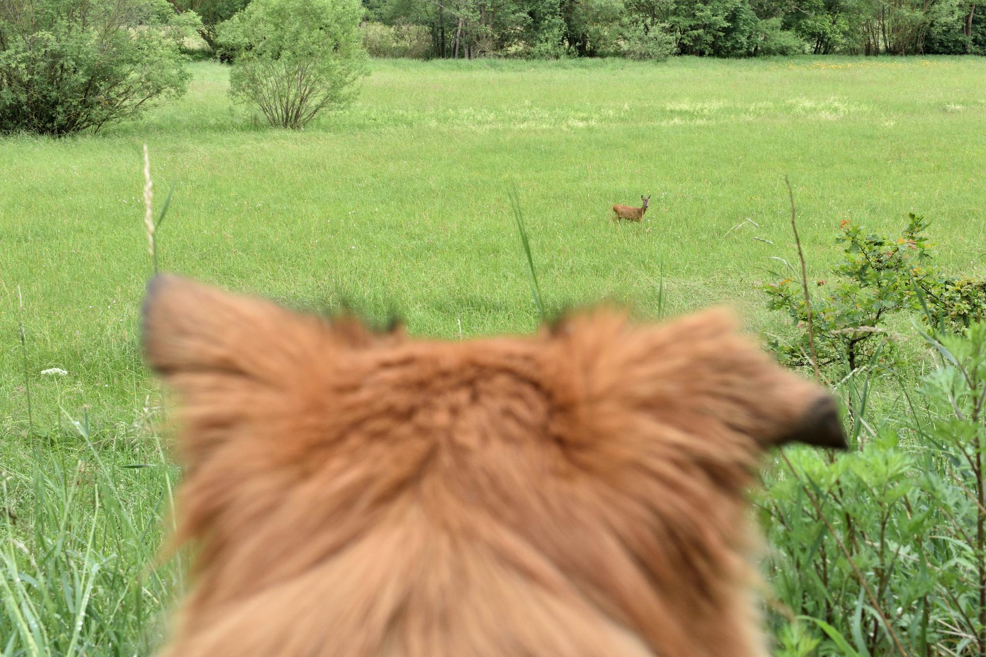 Auge in Auge... | Nonverbale Kommunikation ist das A und O tierischer Freundschaften - selbst auf dieser Distanz verstehen wir uns blendend! :-)